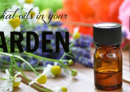 Essential-Oils-in-Your-Garden (1)